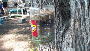 homemade water purification system made from a bottle