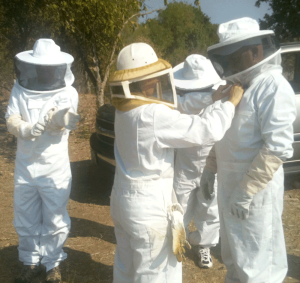 getting the bee suits on