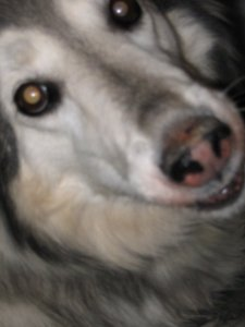my dog Saoirse